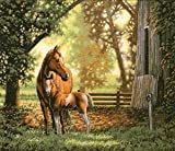 Dimensions Gold Collection Mare & Foal Counted Cross Stitch Kit 14
