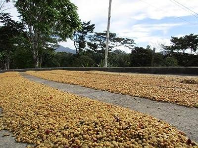 5LBS Panama Finca Santa Teresa Washed Unroasted Green Coffee Beans by Bodhi Leaf Trading Company