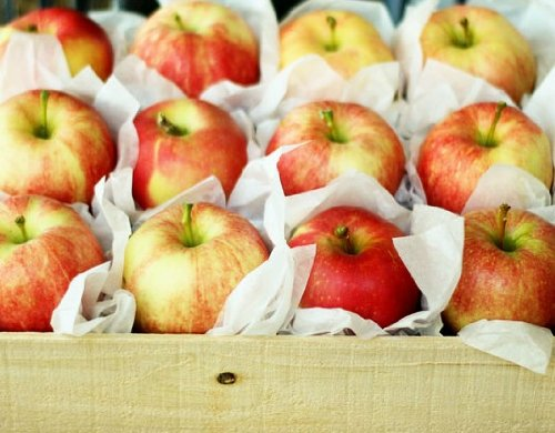 Fresh in Season Fruit Honeycrisp Apples Gift Box