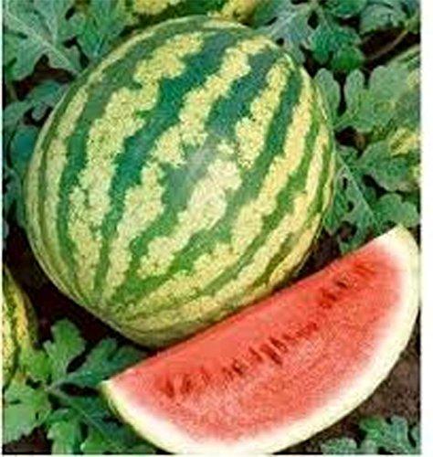watermelon-klondike-striped-blue-ribbon-seed-organic-non-gmo-50-per-pkg