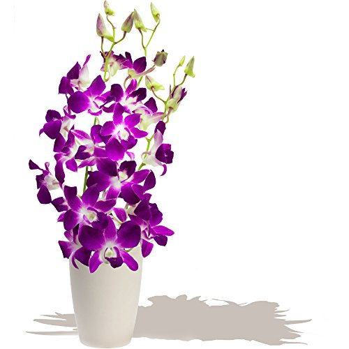 brunei-dendrobium-orchids-bouquet-birthday-flowers-thank-you-and-anniversary-bouquets-by-eden4flower
