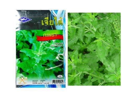 Thai Basil Seeds Kra-Prao Grow Your Own Organic Thai Herbs 2,400 Quality Seeds