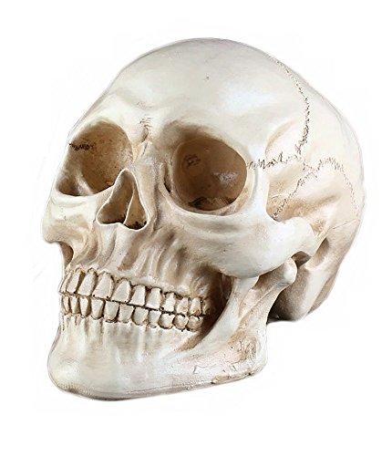 ドクロ ガイコツ スカル 頭蓋骨 頭部 模型 リアル インテリア