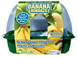 DuneCraft Sprout 'n Grow Greenhouses Banana by DuneCraft