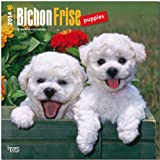BrownTrout Bichon Frise Puppies 2014 Wall