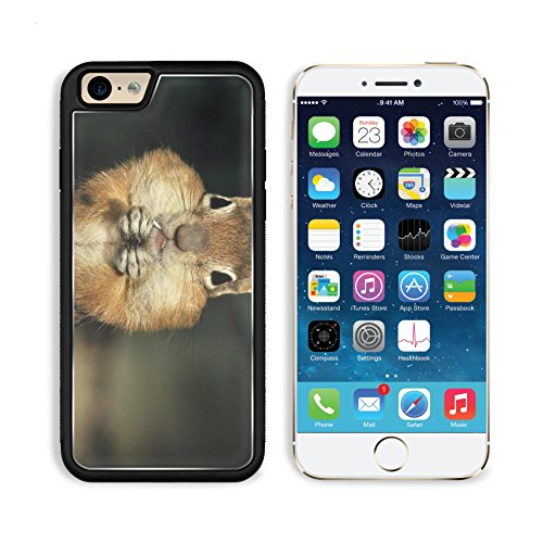 Brown Squirrel Stuffed Checked Nuts Apple Iphone 6 Tpu Snap Cover Premium Aluminium Design Back Plate Case Customized Made To Order Support Ready Msd Iphone_6 Professional Case Touch Accessories Graphic Covers Designed Model Sleeve Hd Template Wallpaper P front-1050414