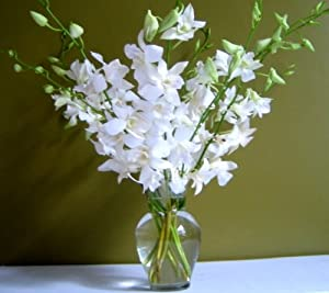 Fresh Flowers – Just Orchids White Dendrobium with Vase