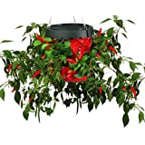 Felknor Ventures TT051112 Topsy Turvy Hot Pepper Planter (Discontinued by Manufacturer)