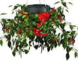 Topsy Turvy Hot Pepper Planter-''Turning The World Of Gardening Upside Down''