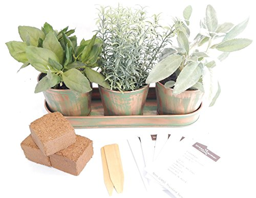 Indoor Culinary Herb Container Kit 5 Herbs Copper
