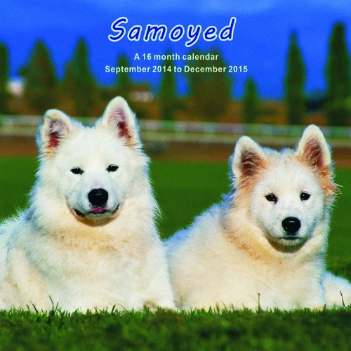 Samoyed Calendar - 2015 Wall calendars - Dog Calendars - Monthly Wall Calendar by Magnum