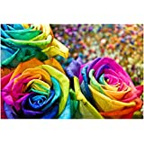 Rainbow Rose Seeds - Multicolor Variety Roses - Winter Hardy Plant -10 Seeds