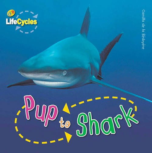 Pup to Shark (Lifecycles)