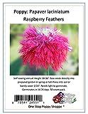 50 Poppy Flower Seeds. Raspberry Laciniatum Poppies. One Stop Poppy Shoppe Brand.