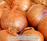 *Organic* Shallots Dutch Yellow - Gourmet! 1/2 lb. Bag Shallot Bulbs to Plant