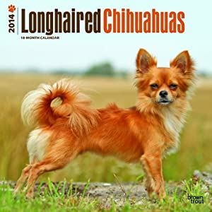 Longhaired Chihuahuas - 2014 Calendar