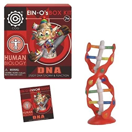 DNA: EIN-O's DNA Box Kit