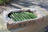 大内ファーム 農家直送 もぎたて新鮮きゅうり 2kg