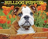 Just Bulldog Puppies 2015 Wall Calendar