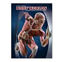 Body Worlds - The original exhibition of real human bodies