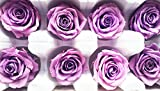 Preserved Purple Roses Head Pack of 8