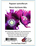 100 Poppy Flower Seeds. Papaver somniferum. Gorgeous Neon Heirloom Poppies by One Stop Poppy Shoppe.
