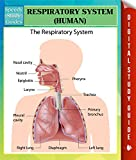 A guide about the respiratory system is a great benefit for teachers in the classroom setting. This reference guide can be a great resource for teaching the importance of the respiratory system as well as the many parts of it. The guide is al...