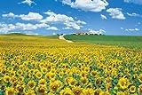 パズルの超達人 2016ピース 陽光に広がるひまわり畑-スペイン 23-555