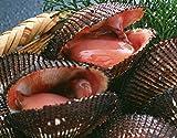 特大 国産 活生 赤貝1kg
