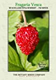 Woodland Strawberry (150) Seeds - Fragaria Vesca - Alpine Strawberry