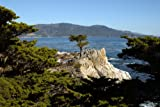 Lone Cypress on 17-mile Drive in California. A Fine-art Photographic Print by Carol M. Highsmith.