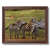 African Zebra Herd Wildlife Home Decor Wall Picture Cherry Framed Art Print