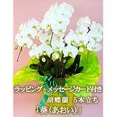 胡蝶蘭 花 開店 還暦 喜寿 米寿 社長就任のお祝いに、5本立ち商品。