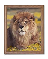 African Lion Sitting Flowers Animal Wildlife Home Decor Wall Picture Oak Framed Art Print