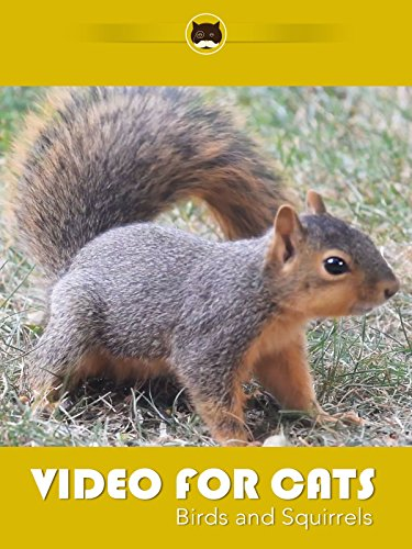 Birds and Squirrels for Cats to Watch. ENTERTAINMENT VIDEO FOR CATS.
