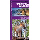 California Wildlife: A Folding Pocket Guide to Familiar Species (Pocket Naturalist Guide Series)