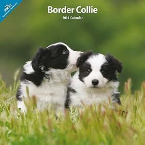 Amazon.com : Border collie 2014 Calendario de pared : Pet Supplies