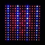 LEDwholesalers 2501QUAD Blue/Red/Orange/White 225 LED 13.8 Watt Square Grow Light Panel 110 Volt