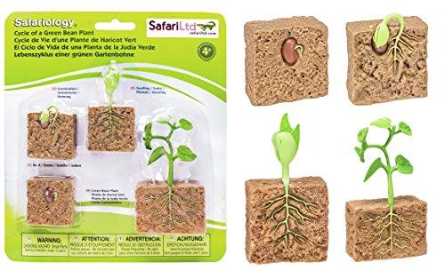 safari-ltd-life-cycle-of-a-green-bean-plant