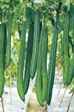 Ridge Gourd Seeds by National Gardens