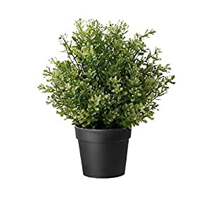 Amazon.com: Ikea Artificial Potted Plant, Thyme, 9.5 Inch