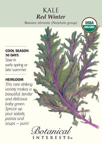 Red Winter Kale Certified Organic Heirloom Seeds 250 Seeds