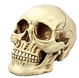 リアルなドクロ・頭蓋骨模型 頭部模型 お部屋や店のインテリアに最適