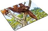 Liili Mouse Pad Natural Rubber Mousepad Orangutan in the jungle of Borneo Malaysia Photo 20894093
