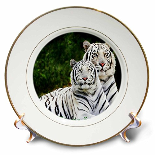 3dRose cp_54187_1 White Tigers Porcelain Plate, 8-Inch