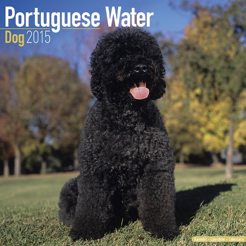 Portuguese Water Dog Calendar - Just Portuguese Water Dog Calendar - 2015 Wall calendars - Dog Calendars - Monthly Wall Calendar by Avonside