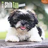 BT Shih Tzu Puppies 2015 Wall