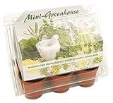 Kit de plantation graines 6 herbes aromatiques mini serre