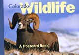 Colorado Wildlife: A Postcard Book (Postcard Books) (0762736097) by The Globe Pequot Press