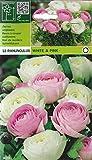 Ranunculus - Ranunkeln - Mischung weiß-rosa